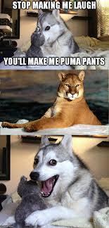 Puma Pants Meme - dog and puma show imgflip