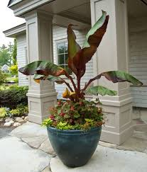 Challenge Plant Pot 5 Pro Tips For Healthy Beautiful Container Gardens