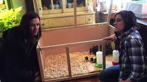 setting up a brooder box for youtube