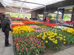 flower garden in amsterdam keukenhof flower show amsterdam netherlands world festival
