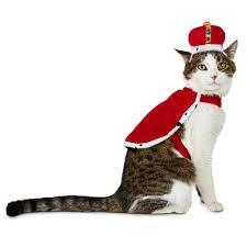 halloween spirit store locator bootique king cat costume petco