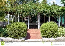 pergola with trumpet vines stock photo image of plant 11345048