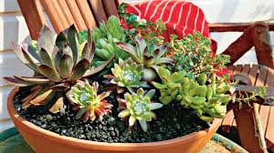 Southern Living House Plans One Story How To Plant Succulents In Containers Southern Living