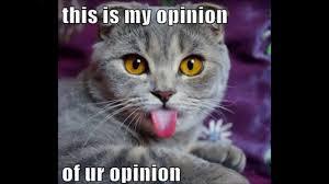 Funny Meme Cat - funny cat memes the best funny cat memes slapwank