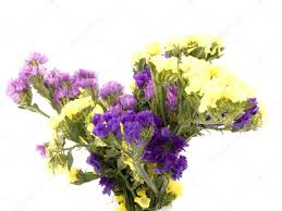 statice flowers statice flowers limonium sinuatum stock photo mrsnstudio