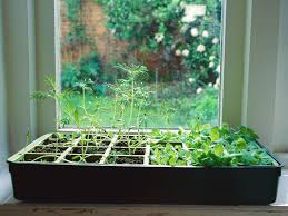 how to grow an indoor herb garden today com