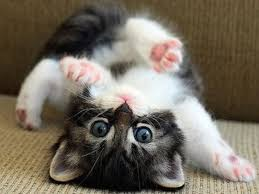 cute cat pictures hd wallpapers free download