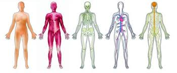 The Human Body Picture Basic Introduction To The Human Body U2013 Natural Medicine College