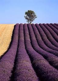 d馗o chambre violet gris takeshi a21663003 on