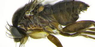 bbc earth alien flies buzzing american city of los angeles