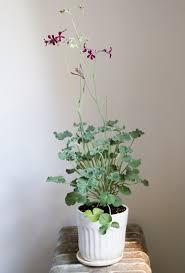 Planters And Pots Simple Stuff Planters And Pots U2013 Reading My Tea Leaves U2013 Slow