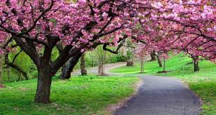 top 10 reasons to admire and honor trees nurserylive