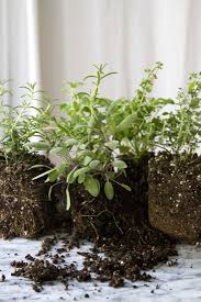 small space diy countertop herb garden gardenista