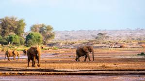 the truth about elephant tourism in asia rough guides rough guides