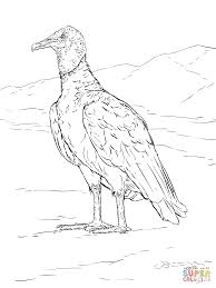 realistic black vulture coloring page free printable coloring pages