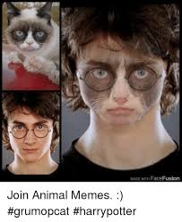 Grumpy Face Meme - made with face fusion join animal memes grumopcat harrypotter