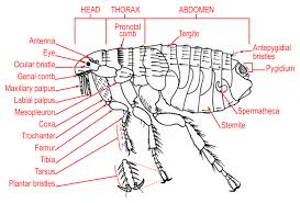 Internal Dog Anatomy Inner Body Archives Page 24 Of 73 Human Anatomy Chart
