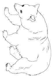 black bear coloring