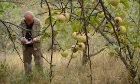 Blackmoor Fruit Trees - sweet pilgrimage two british apple growers in the tian shan steppe