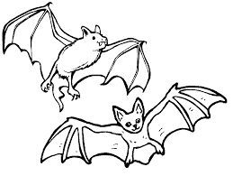 cool bat pictures print special picture colouring pages