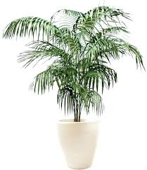 low light indoor trees fake indoor trees fake indoor trees fake trees maple artificial tree