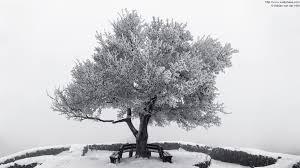 photo frozen tree in winter löwenburg castle ruin in bad honnef