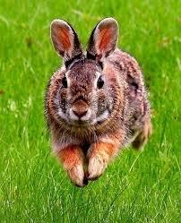 animali da cortile definizione razze conigli conigli