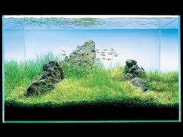 Nature Aquascape Aquatic Eden Aquascaping Aquarium Blog