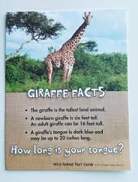 learning about giraffes share u0026 remember