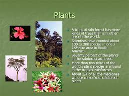Adaptations Of Tropical Rainforest Plants - tropical rainforest mr hardt u0027s science class 8 th grade level