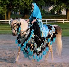 Halloween Costumes Horse Lovely Chelsey U0027s Custom Native Arabian Horse Costumes Horses