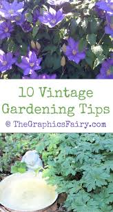 gardening tips 161 best flower garden u0026 gardening tips information and ideas