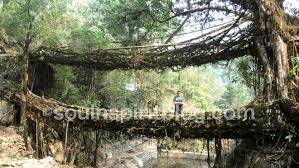 walking on the edge double decker root bridge near shillong
