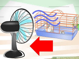 Cool Pets Rabbit Hutch How To Keep Pet Rabbits Cool 11 Steps With Pictures Wikihow