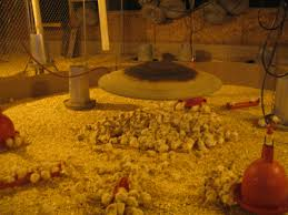 when is thanksgiving in 2013 22 facts that might make you pass on turkey this year peta