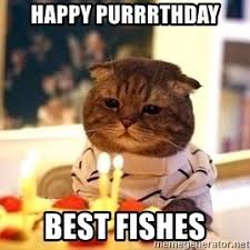 birthday cat meme generator