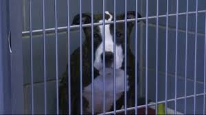dog owners warned of deadly disease necn