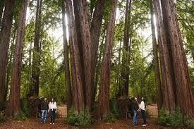 California Forest images California forest engagement session petrise rich gilroy jpg