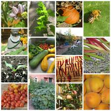 How Many Square Feet In Half An Acre 1 8 Acre Urban Farm Ever Growing Farm Ever Growing Farm