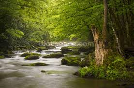 great smoky mountains tremont river wallpaper wall mural great smoky mountains tremont river wall mural photo wallpaper