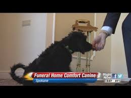 Comfort Funeral Home Therapy Dog Helps Gives Comfort At Funeral Home Youtube