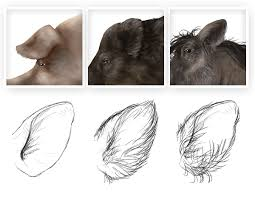 how to draw animals domestic pigs wild boars and warthogs
