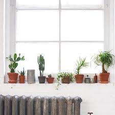 plantes chambre chambre à coucher grunge matin plantes image 3444079