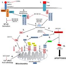 daniel lacoste a réuni sa viruses free text poxviruses utilize strategies to