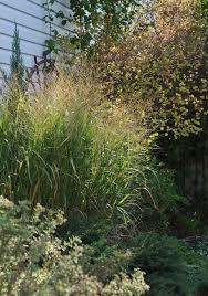 1056 best puutarha heinäkasveja images on ornamental