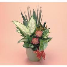Flower Delivery San Angelo Tx - flower shops san angelo tx flower inspiration