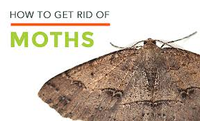 How To Get Rid Of Bugs In Kitchen Cabinets Clothes Moths Facts How To Get Rid Of Moths