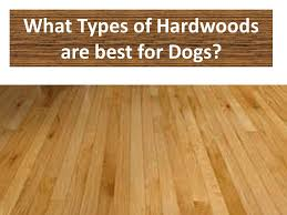 Best Flooring For Pets Best Hardwood Flooring For Dogs Advice And Flooring Ideas