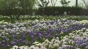 flower japanese garden japan 4k stock video 768 501 501