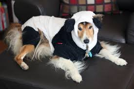 halloween for dogs costumes panda dog costume with arms image gallery hcpr